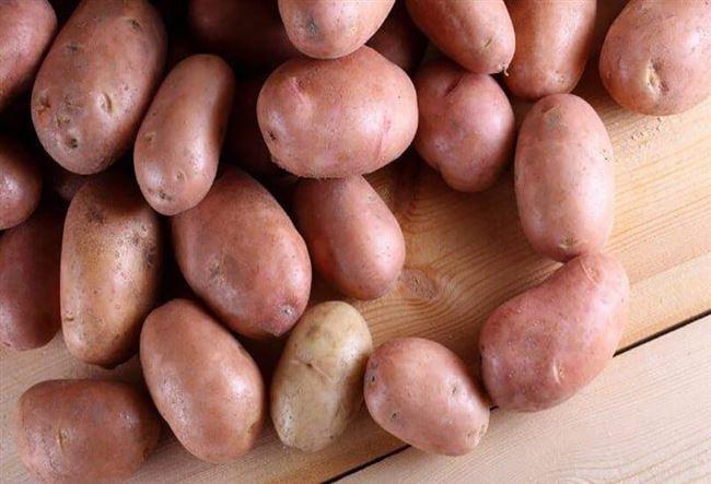 "Сорт картофеля ""Факел"""
