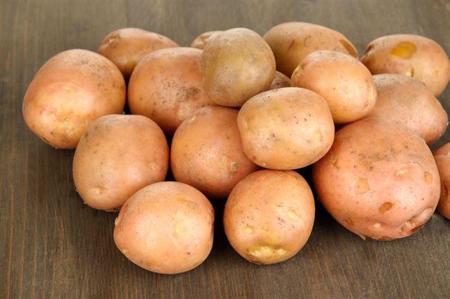 Высокоурожайный культивар с массивными клубнями — картофель Фрителла: описание сорта и отзывы