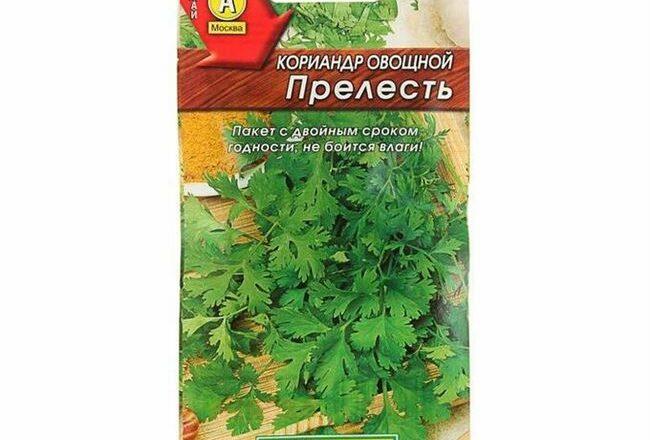 Шико - сорт растения Кориандр овощной