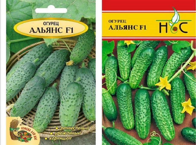 Вкусные плоды при легком уходе — огурец Альянс f1: описание сорта