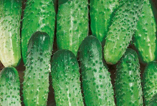 Новинки раннеспелых зеленцов от компании «Евро-Семена»