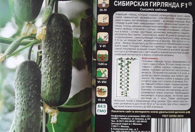 Сорт огурцов Дамские пальчики F1: отзывы, фото, урожайность, секреты выращивания