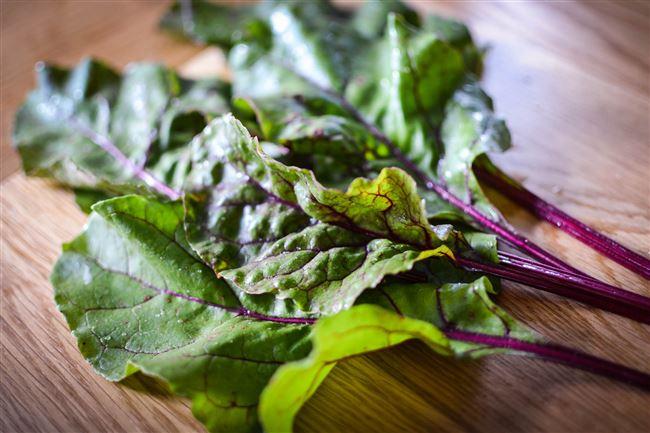 Болезни и вредители листовой свёклы