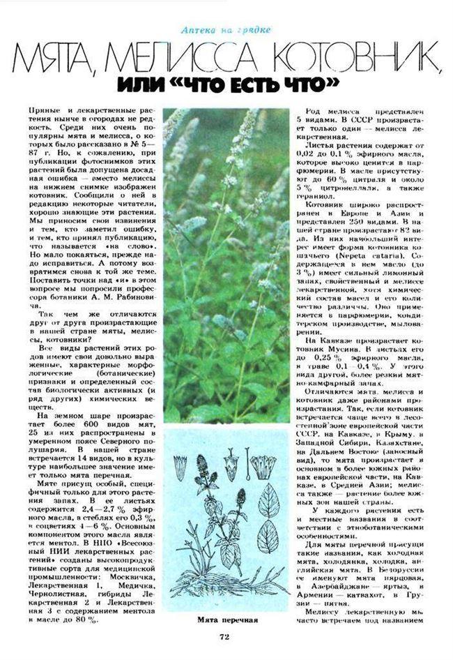 Вегетативное размножение мелиссы