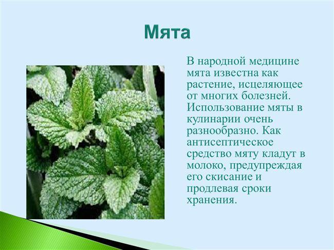 Происхождение и характеристики растения