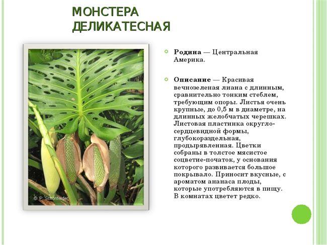 Ботаническое описание и характеристика