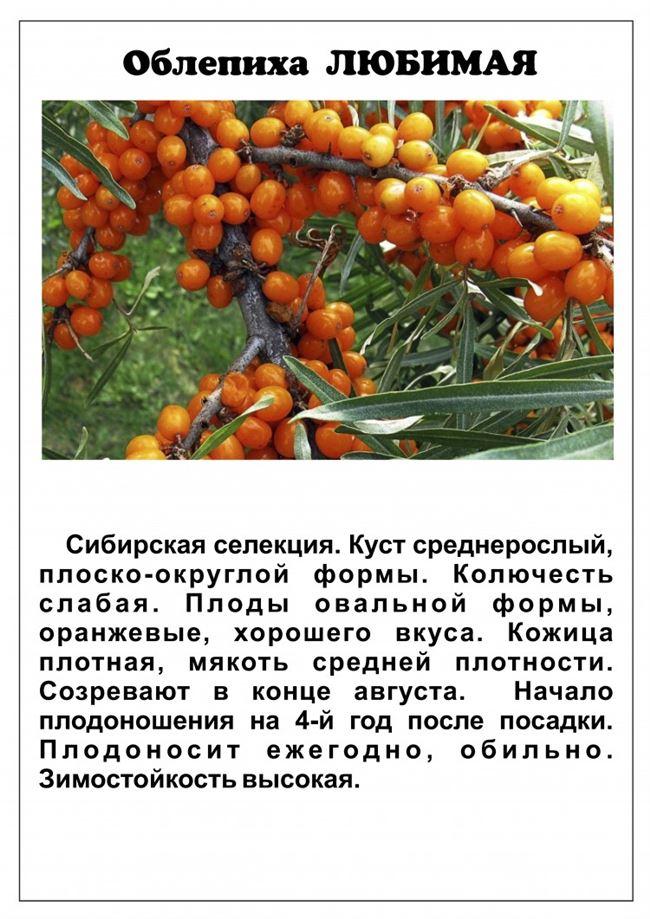 Описание созревших плодов
