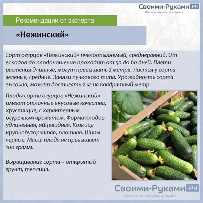 Общее описание кустовых огурцов