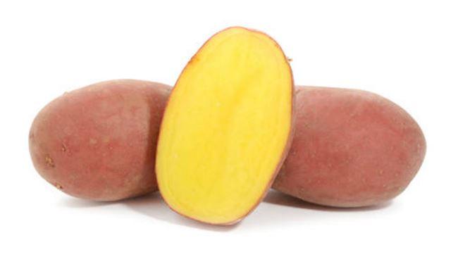 Описание сорта картофеля Балтик Роуз