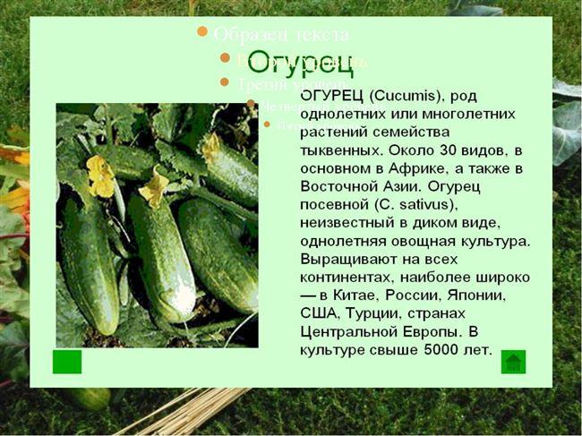 Применение и уборка овоща