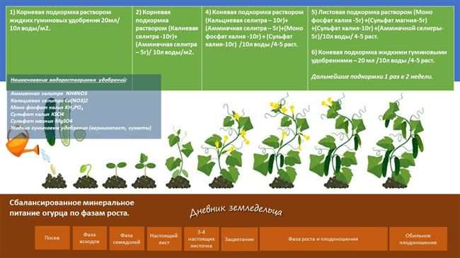 Подготовка почвы и удобрения