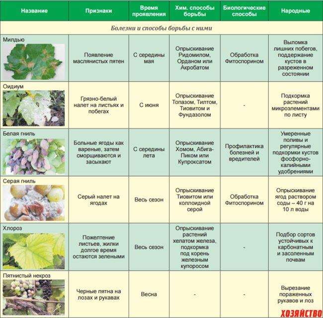 Защита от болезней и вредителей (таблица)