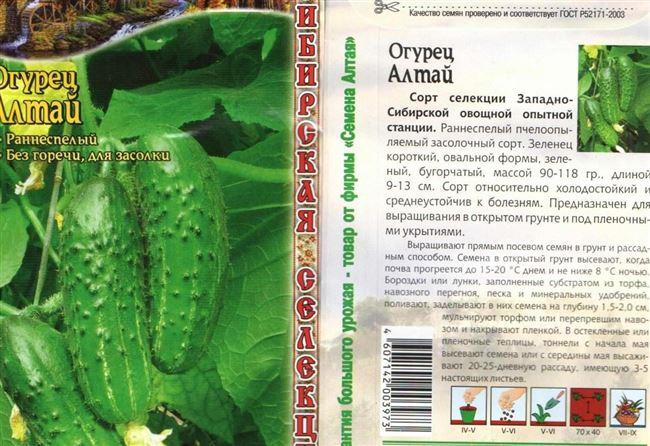 Описание популярных сортов холодостойких огурцов