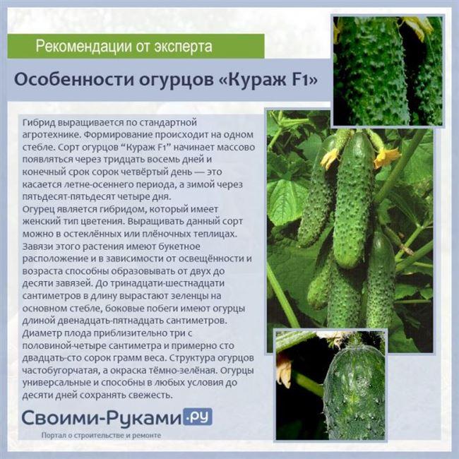 Описание и характеристика сорта
