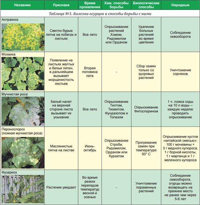 Вредители и болезни огуречного сорта