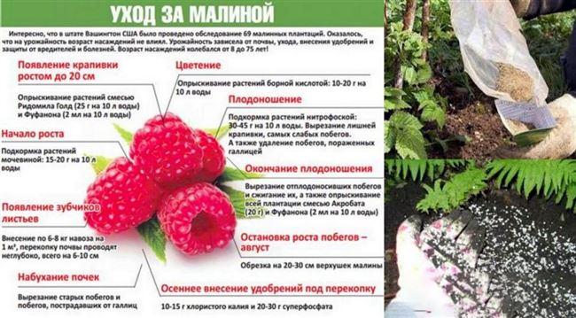 Подкормка плодов