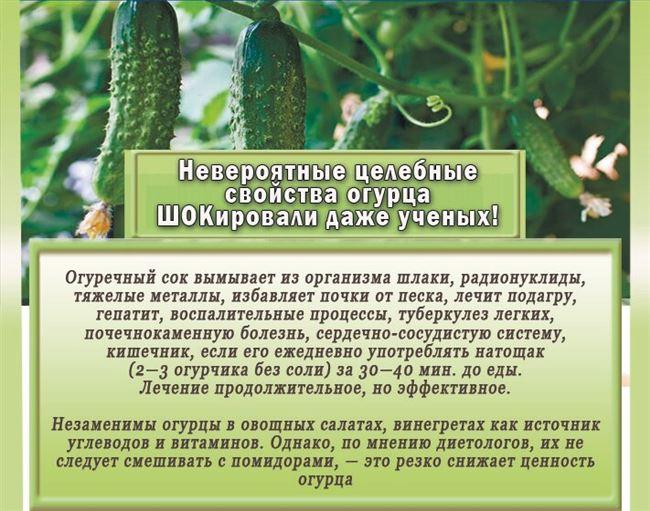 Особенности куста и плодов