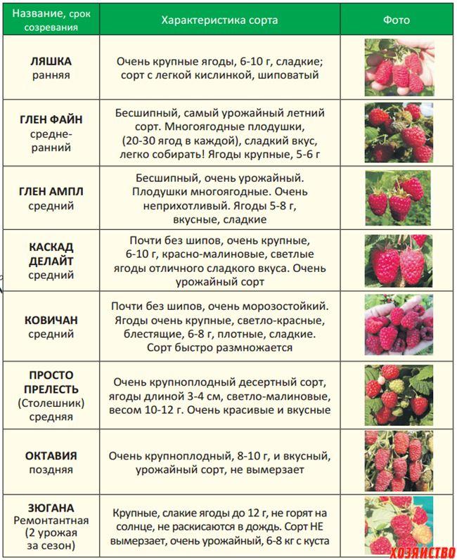 Сроки цветения и созревания