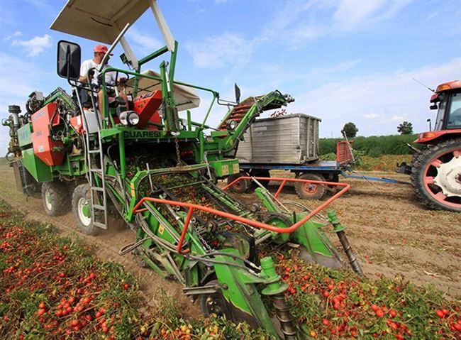 Видео: механизированный сбор урожая гибрида Гектор в поле