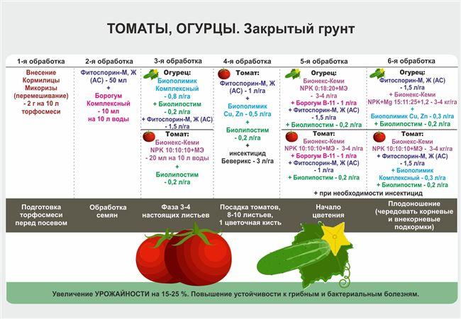 Сортовые характеристики и внешний вид томата