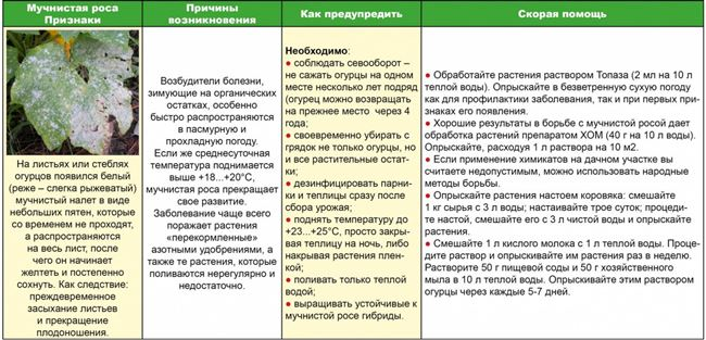 Защитапастернака растений от болезней и вредителей