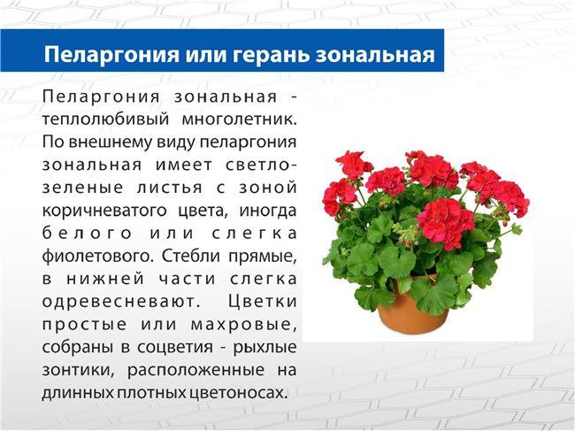 Описание и характеристика растения