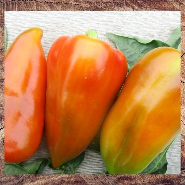 Описание сладкого перца Болгарец, отзывы, фото