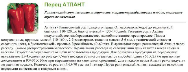Основные болезни болгарского перца