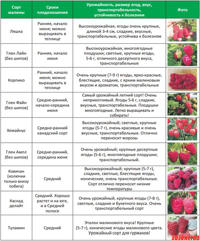 Опыляемость и урожайность
