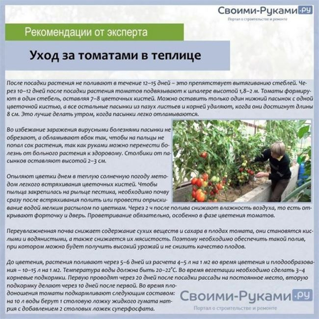 Общие указания посадки сладкого перца в теплице. Какие сорта лучше подходят для выращивания в тепличных условиях - Агроному.com