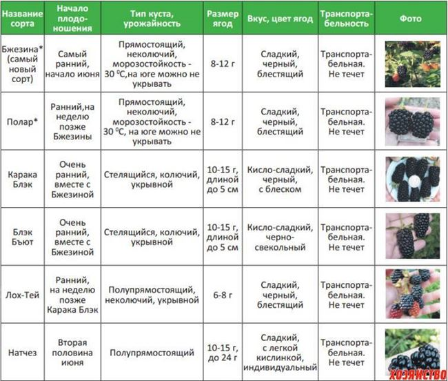 Таблица: особенности подкормки