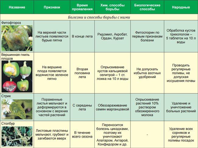 Фотогалерея: признаки основных болезней и вредителей горького перца