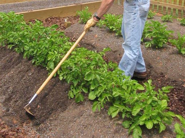 Окучивание и рыхление почвы