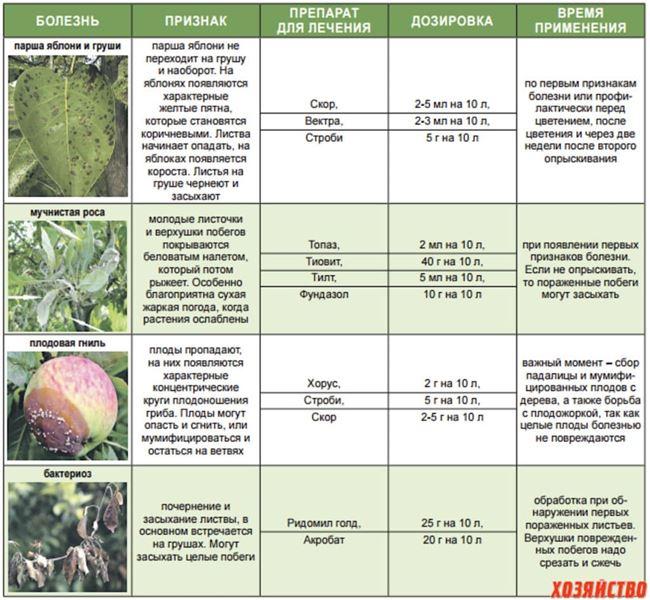 Вредители, болезни и профилактика