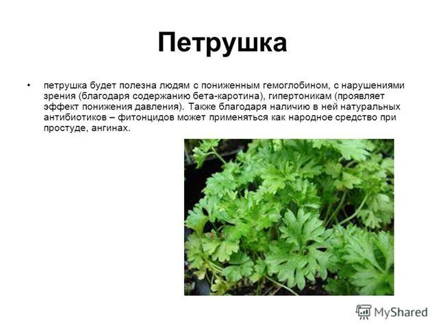 Описание и характеристики растения
