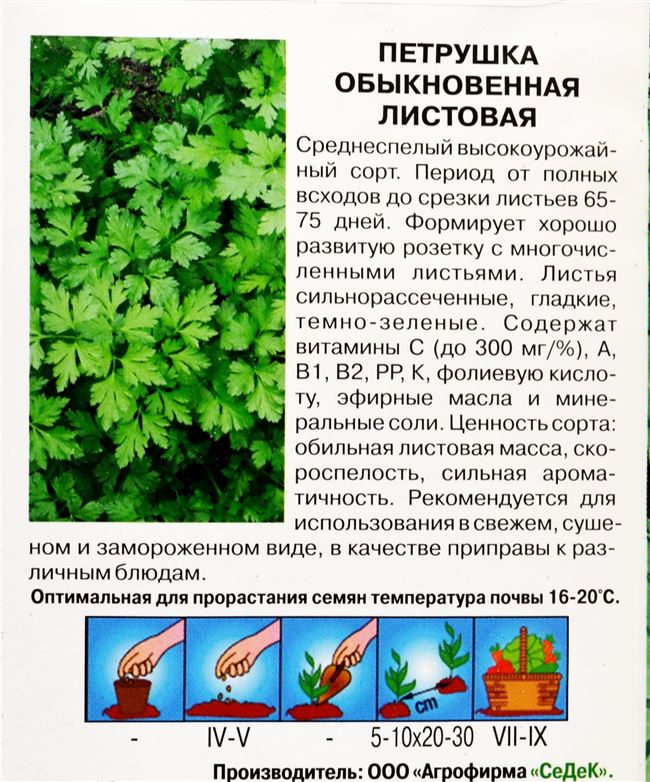 Петрушка Вега описание сорта