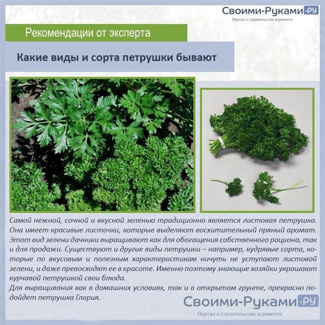 Последующий уход за растениями