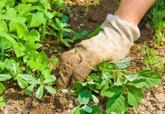 Рыхление почвы и борьба с сорняками