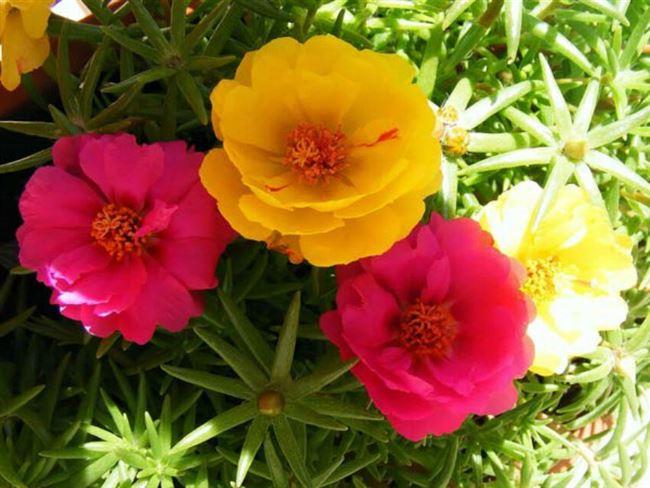Подкормка для пышного цветения