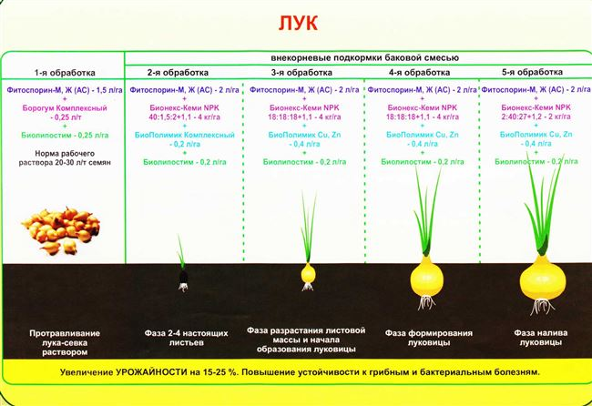 Сроки и схемы посадки/посева