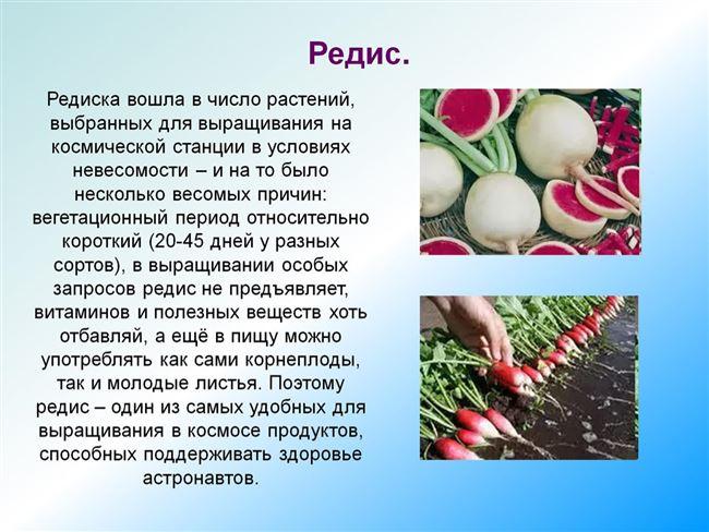 Характеристика внешнего вида растения и корнеплодов