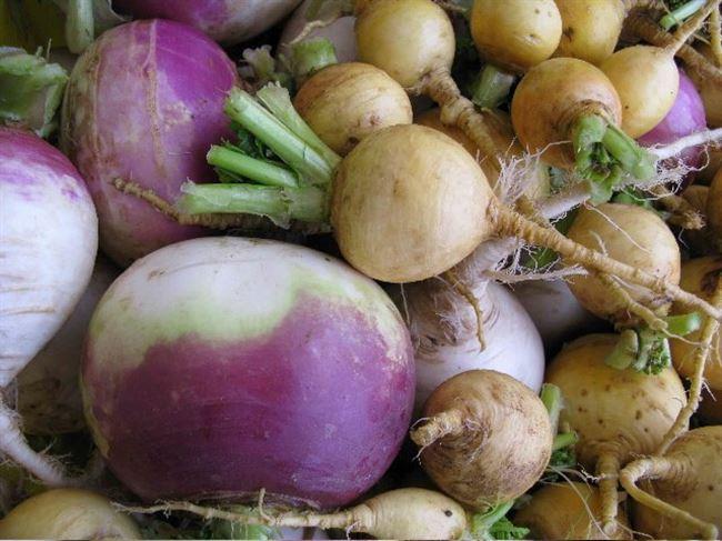 Видео: как правильно хранить корнеплоды