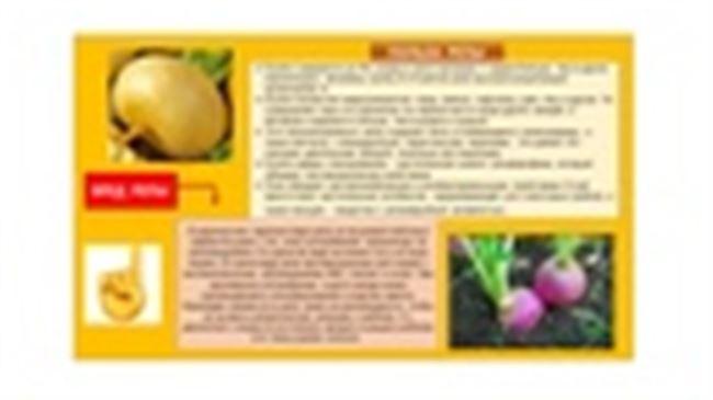 Общие характеристики и описание репы
