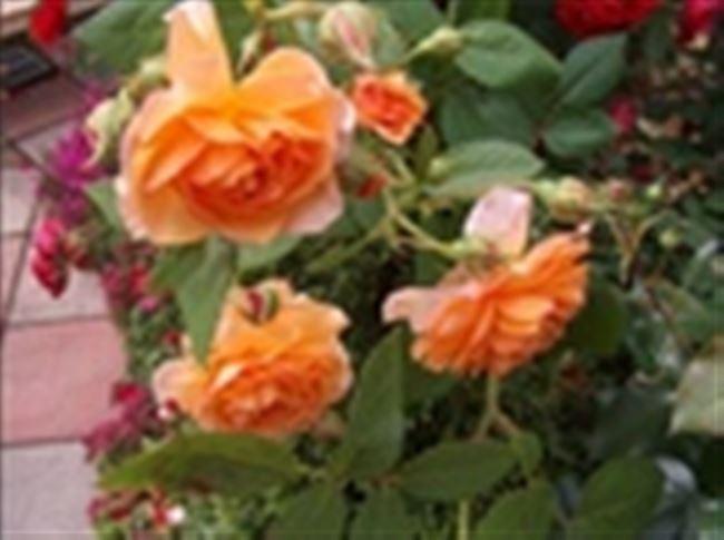 Отзывы и мнения садоводов