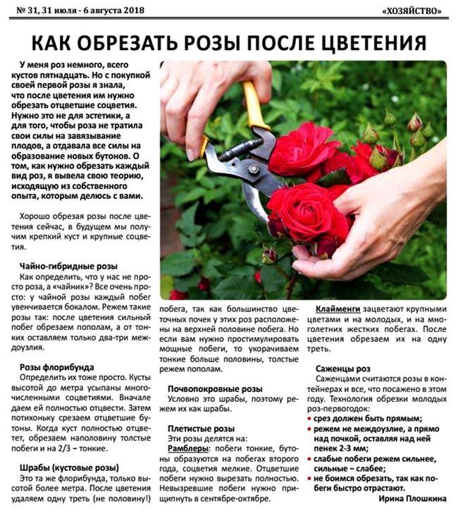 Требуемые условия для выращивания