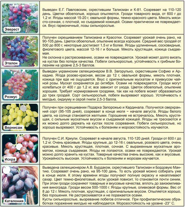 Урожайность, устойчивость, хранение