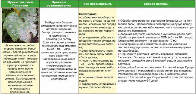 Таблица: способы борьбы с вредителями сельдерея