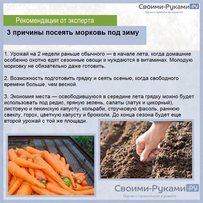 Прореживание всходов – необходимый агротехнический прием