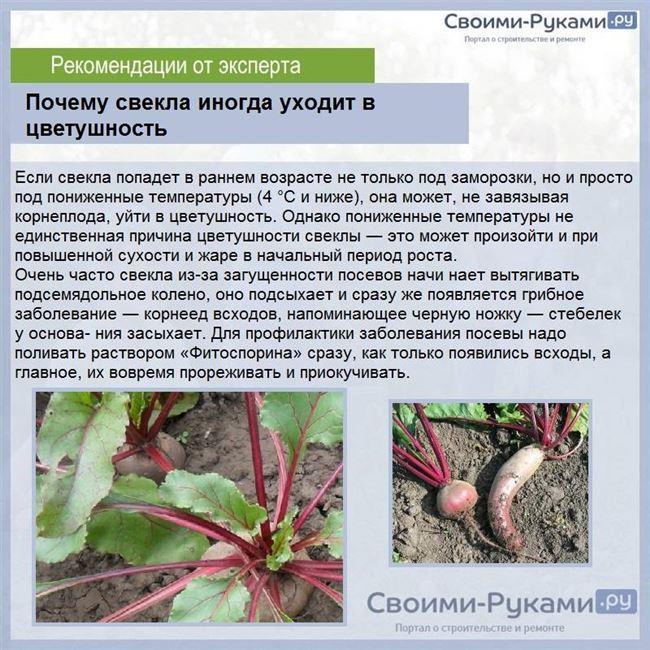 Основные болезни листьев и корнеплодов свеклы