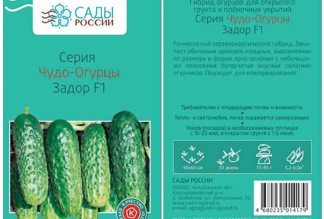 Немыслимые урожаи привлекательных и очень вкусных плодов — огурец Задор F1: описание и характеристика сорта